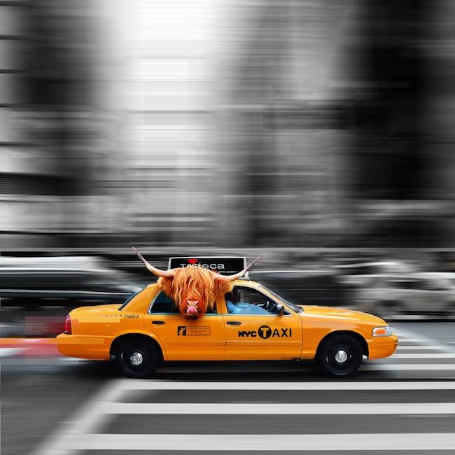 Taxi Passenger Print