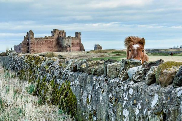 Johnny Edwards - the perfect shot of the 14th-century Tantallon Castle which overlooks the Firth of Forth in North Berwick.