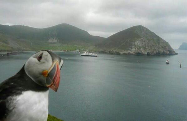 A puffin on St Kilda